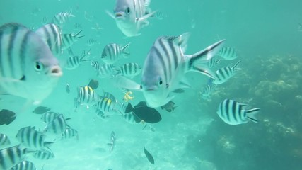Underwater view of fishes on the coral reefs, Zanzibar