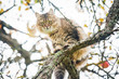 Beautiful tabby cat sitting on the tree