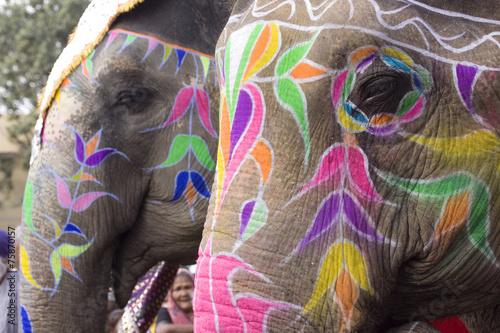 Deurstickers Olifant colorful elephant , festival , Jaipur, Rajasthan, India