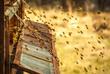 bee hive - 75872706