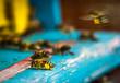 Obrazy na płótnie, fototapety, zdjęcia, fotoobrazy drukowane : bee hive