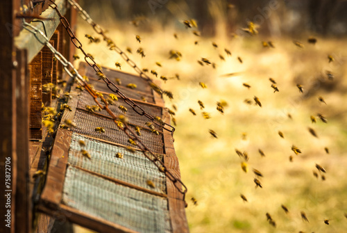 Staande foto Bee bee hive
