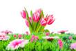 Tulpenstrauß und Blumenwiese