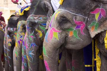 colorful elephant , festival , Jaipur, Rajasthan, India © NH7
