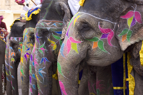 Foto op Canvas Olifant colorful elephant , festival , Jaipur, Rajasthan, India