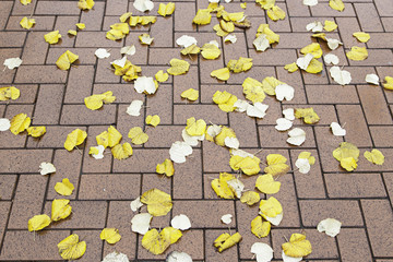 Dried leaves in autumn