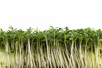 isolated cress on white background - closeup
