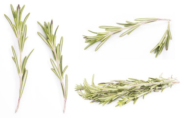 rosemary isolated on white backround