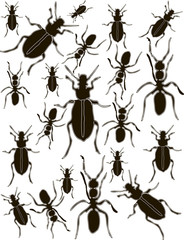 Set Bugs and Ants Silhouettes Vector