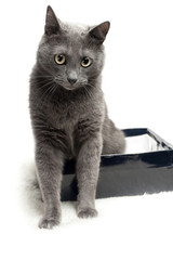 grey cat sitting in the box with funny expression over white bac
