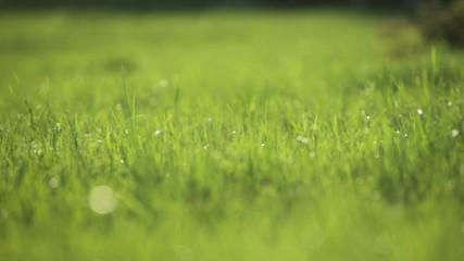 green grass on spring field backlight closeup