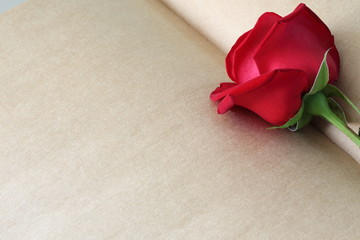 red rose flower on blank paper page for creative your message te