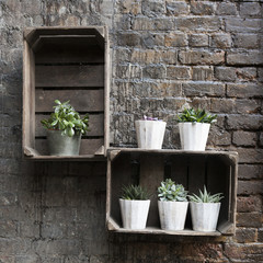 succulents in pots as decoration of  wall of house