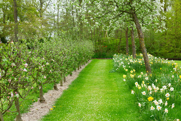 blooming apple trees and green grass