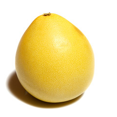 Pomelo Citrus maxima