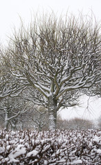 Winter park tree