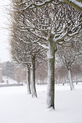 Snowy park trees