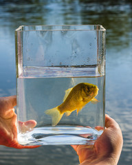 Small fish in a glass jar on the background of lake