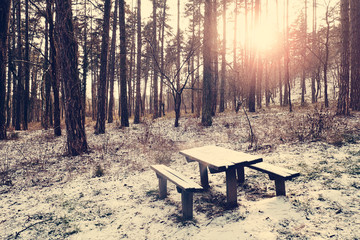 Bench on winter forest