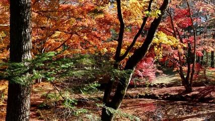 Autumn color of pond, Karuizawa, Nagano, Japan