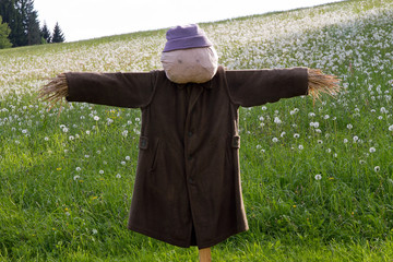 Scarecrow on a meadow
