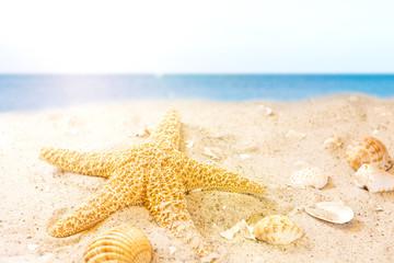 Strand mit Meeresschätzen im Sonnenschein