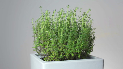 Fresh Herbs rotating 360 degrees. Seamless