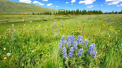 Bighorn National Forest Landscape