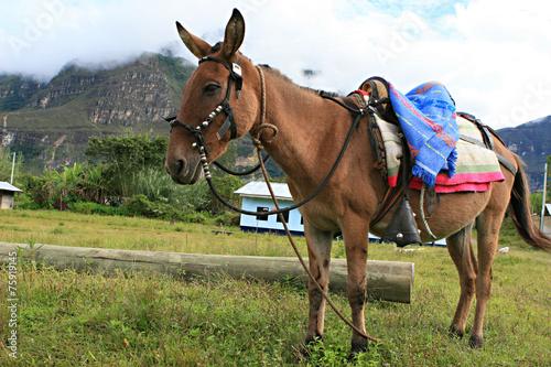 Poster Ezel Donkey with Saddle