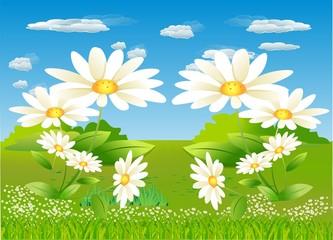 wiosenna łąka,