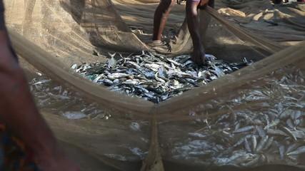 fishing net full of fish splashing on the shore and it sort