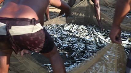 fishing net full of fish