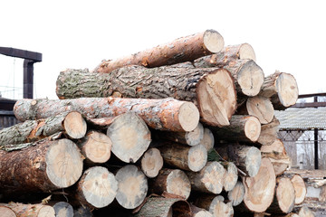 Freshly cut tree pine logs outdoors at winter