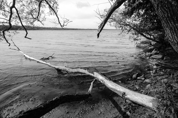 Old tree trunk in the lake in monochrome