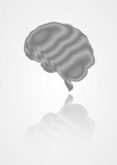 shaded human brain
