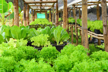 Healthy Vetable in the Organic Farm