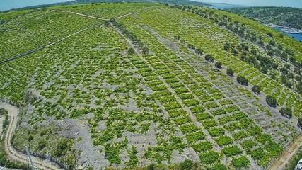 Primosten Vineyards, UNESCO World Heritage site
