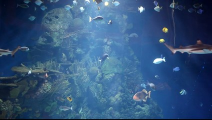 Aquarium with tropical fish