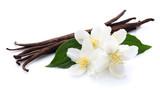 Fototapety Jasmine with vanilla