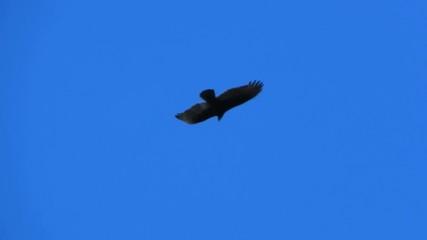 bird flying in bright blue sky