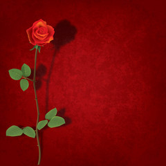 abstract grunge background with rose