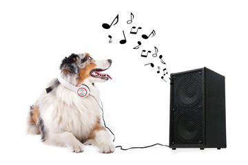Hund hört Lied aus Box
