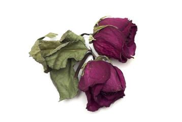 Dry red rose bud. Herbarium. Photo.