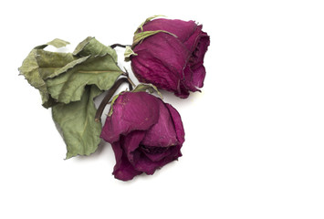 Dry red rose bud. Herbarium. Photo.