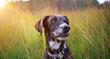 canvas print picture - Glücklicher hund