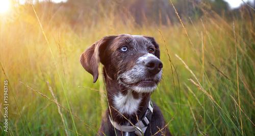 canvas print picture Glücklicher hund