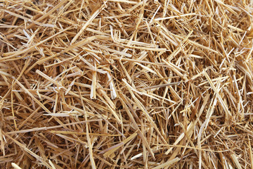 Straw hay texture
