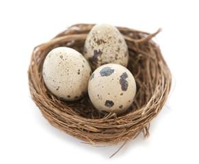 oeufs de caille dans un petit nid de pâques
