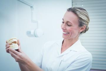 Smiling female dentist holding teeth model