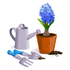 hyacinth flower and garden tools